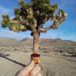 Czerwona 3cm i Joshua Tree – Kalifornia